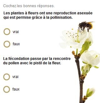 Les plantes à fleurs ont une reproduction asexuée  qui est permise grâce à la pollinisation. Vrai / Faux. La fécondation passe par la rencontre du pollen avec le pistil de la fleur. Vrai / Faux.